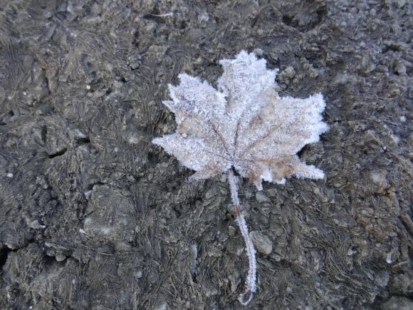 frosty_leaf-20130304